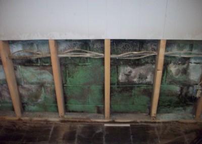 moldygreenwall